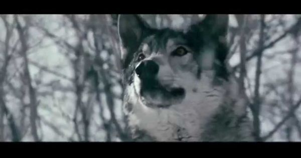 Скачать песни в исполнении волка