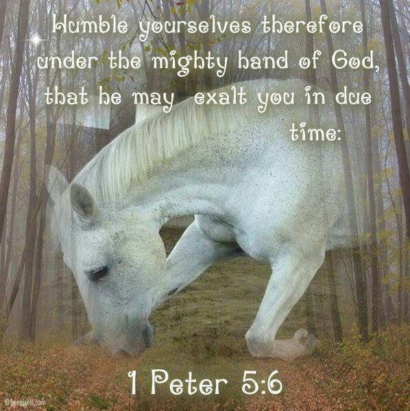 Pin on Horse Pictures With Scripture