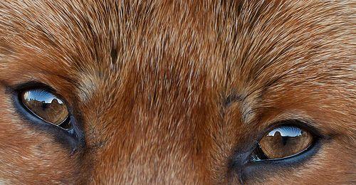 name fox eyes - photo #48