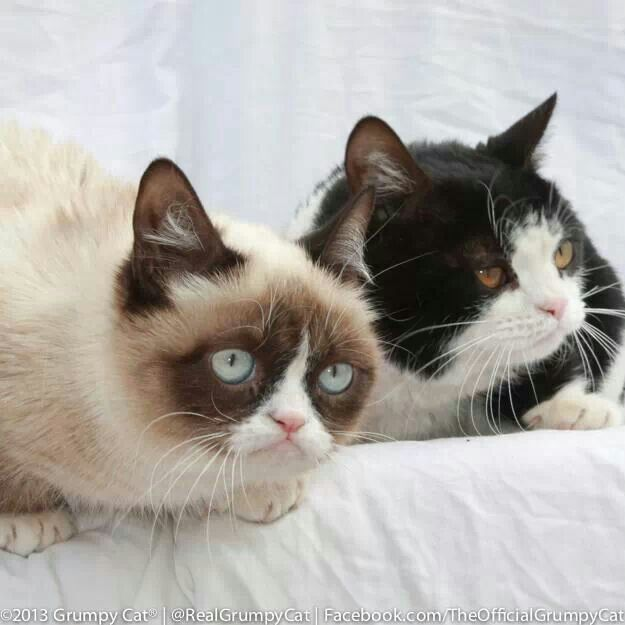 Grumpy Cat S Brother Pokey