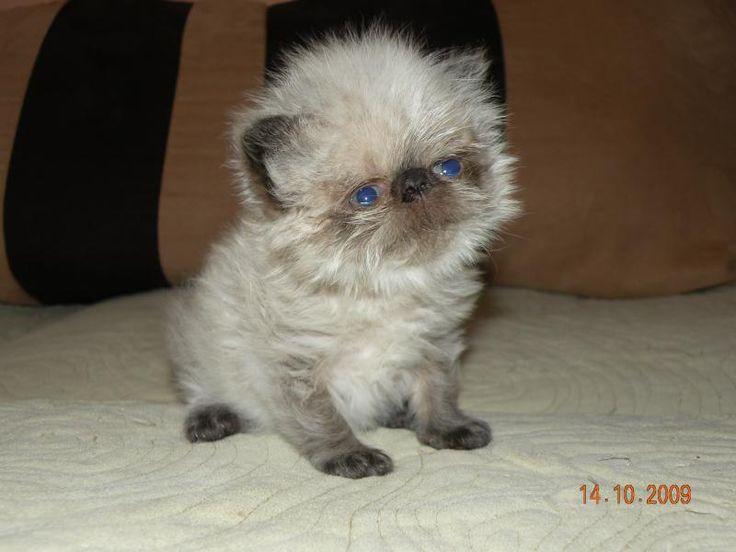 Baby ewok http catshowonline com beguile pinterest