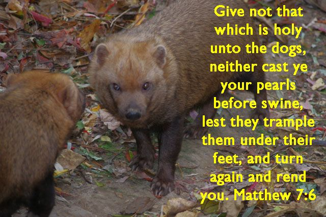 Image result for matthew 7:6