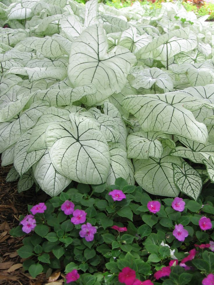 Pin By Earl May Nursery And Garden Center On Annuals Pinterest