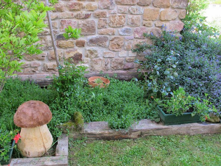 Hongo en el jardin jardineria pinterest for Hongos de jardin