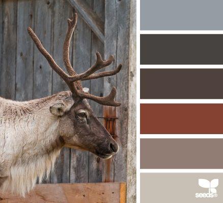 caribou color color inspiration