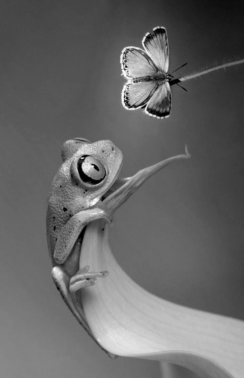 Frog and butterfly. Orig photo - Wil Mijer