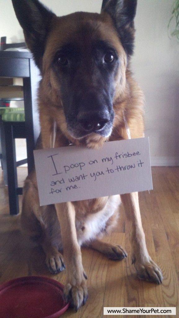 pin animals dogs 3080 - photo #45