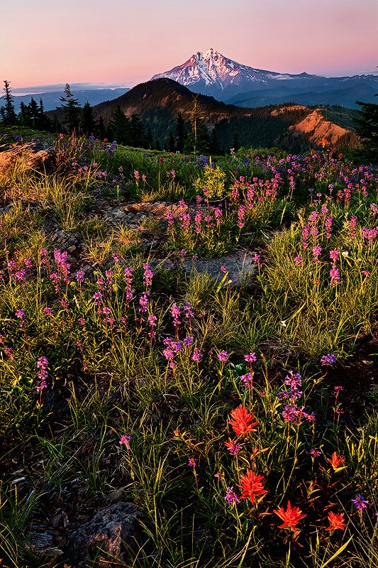 Pink penstemon and red paintbrush, Mount Jefferson, Oregon, by Alan Howe