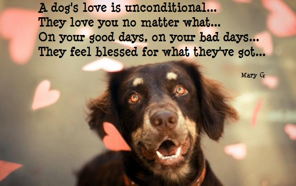 dog 39 s love inspirational poems and quotes pinterest