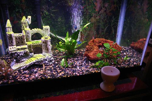 Fish tank ornaments cleaning your fish tank decor nice - Awesome fish tank decorations ...