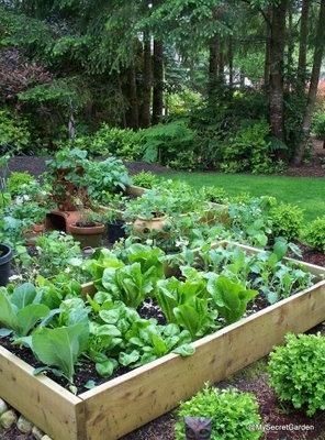 Vegetable garden in boxes
