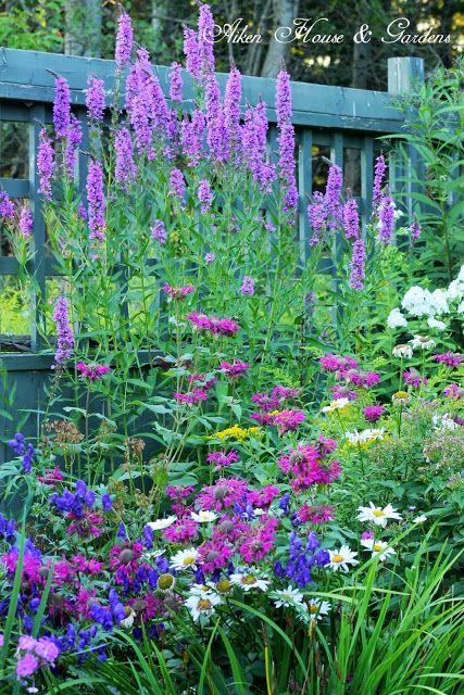 Aiken House & Gardens: Our Late August Garden