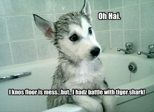 Funny Dog Meme Smile : Funny dog meme smile imgkid the image kid has it