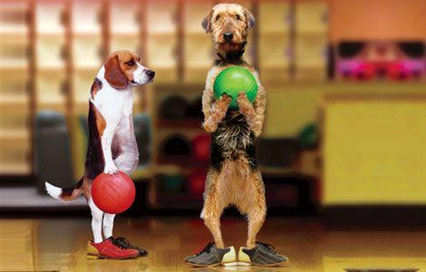 pin animals dogs 3080 - photo #44