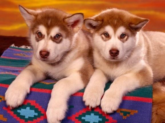 Sweet Dogs Wallpaper Twin Dogs | Dogs &...