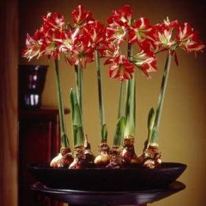 20 Beautiful Indoor Flower Plants Garden Of Katie