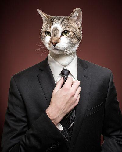Business Cat | Fab Cats | Pinterest