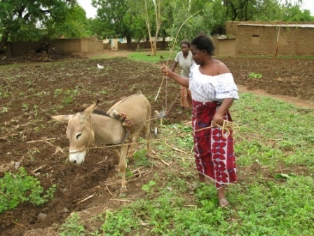 Subsistence thesis of west africa