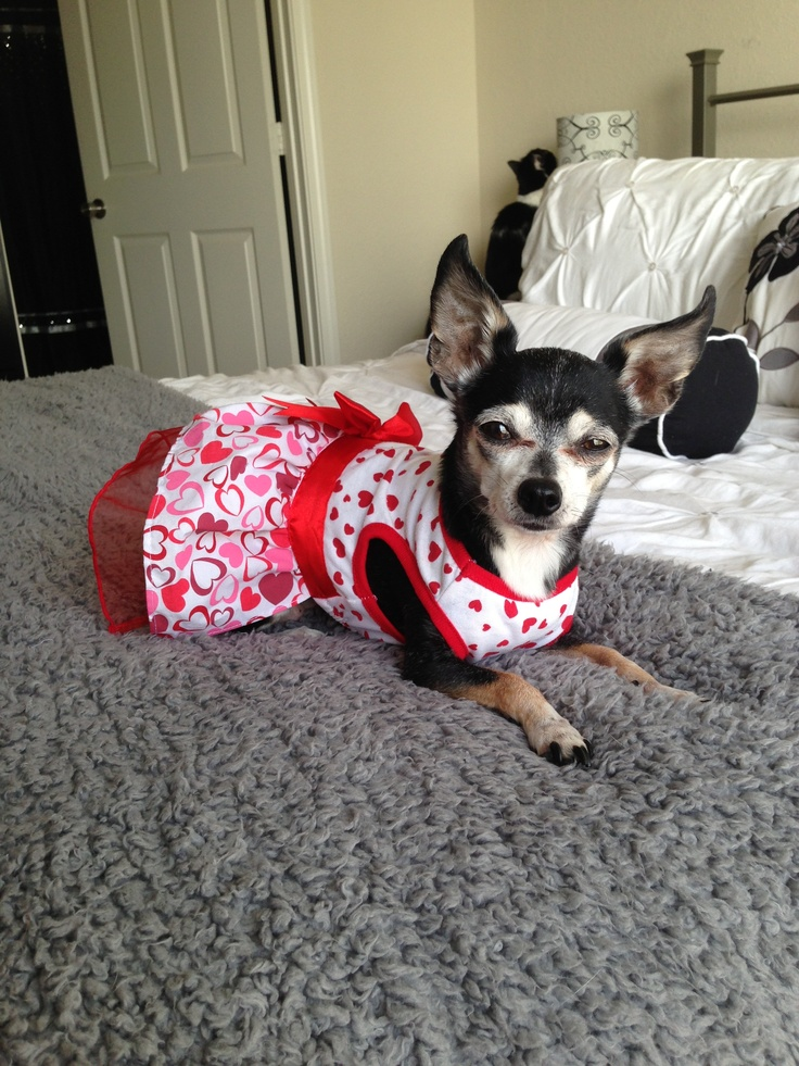 valentine's day dog dress
