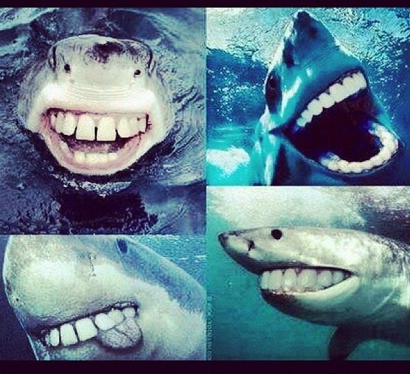 Sharks with human teeth - photo#25