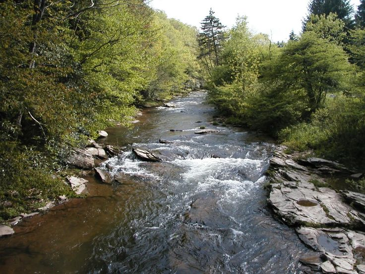 Wv trout streams gandy creek places things to see for Virginia fishing license cost