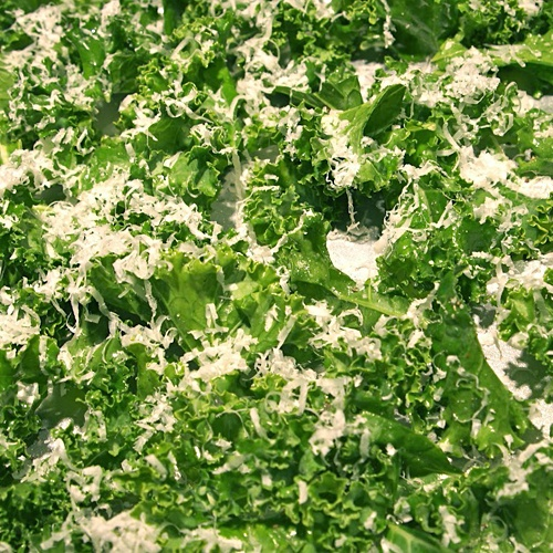 KALE!! A must for our garden next year. Baked Parmesan Kale Chips ...