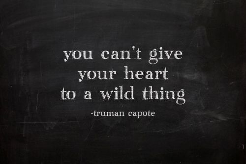 you can't give your heart to a wild thing........