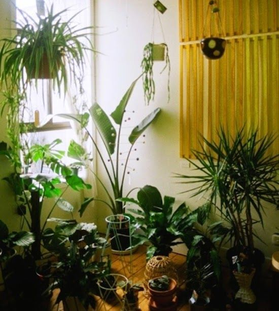 Introducing New Worlds With A Shrug: Insides: House Plant Goodness