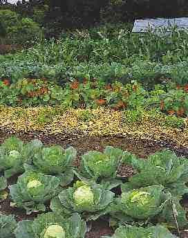 For you...C.D.S.  Vegetable garden