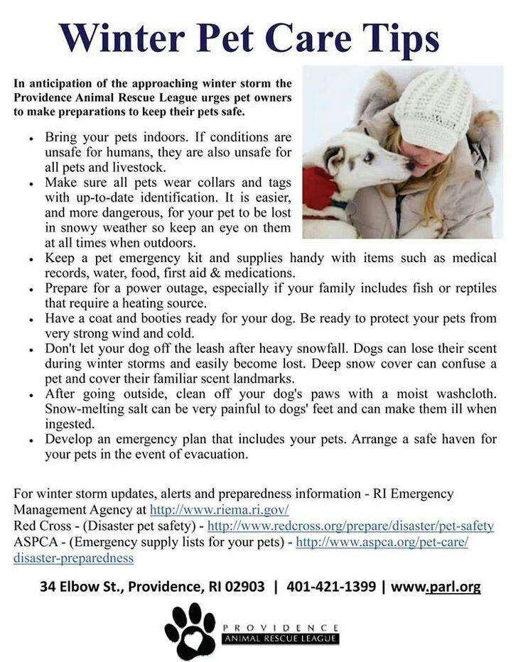 winter pet care tips