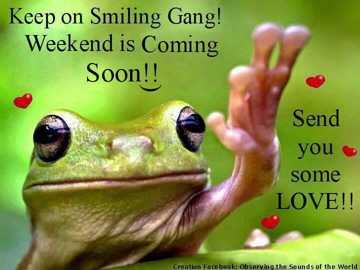Weekends coming  Cartoons and funny things  Pinterest