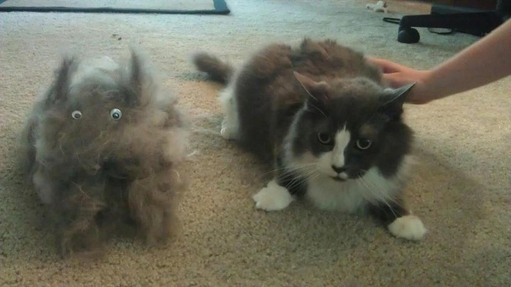 Cat-Clone made from Cats Hair