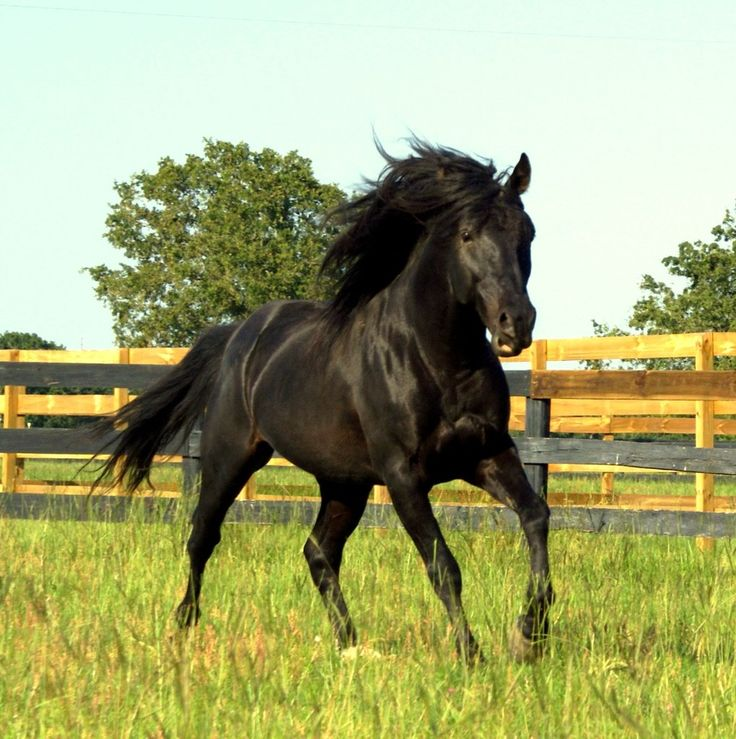 black stallion by selket47 - photo #6