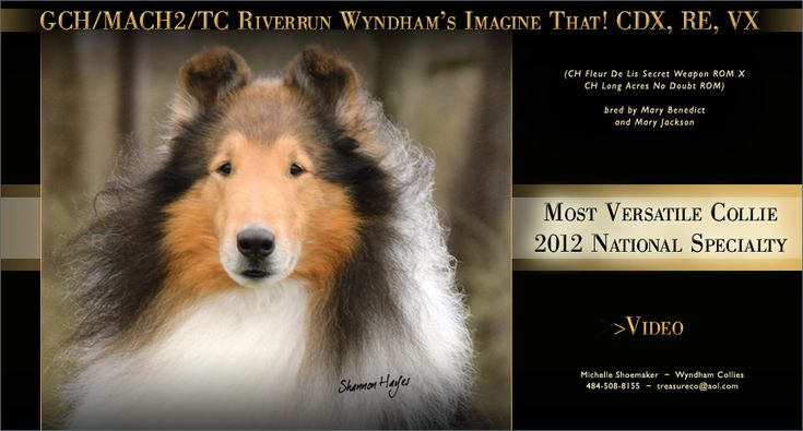 Wyndham Collies -- GCH/MACH2/TC Riverrun Wyndham's Imagine That! CDX, RE, VX