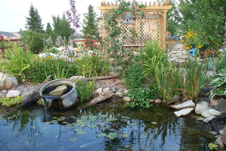 Koi Pond Backyard Ideas : backyards