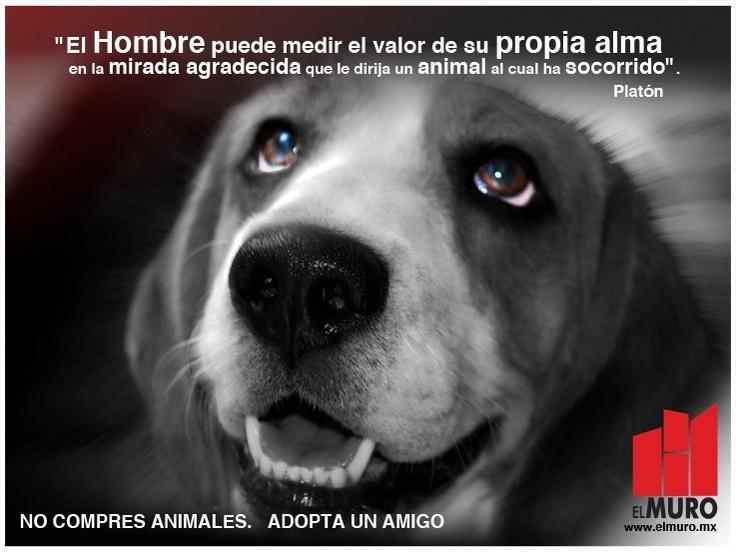 No compres animales. Adopta un amigo.