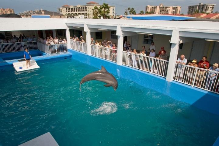 Clearwater Marine Aquarium St Petersburg Clearwater Fl