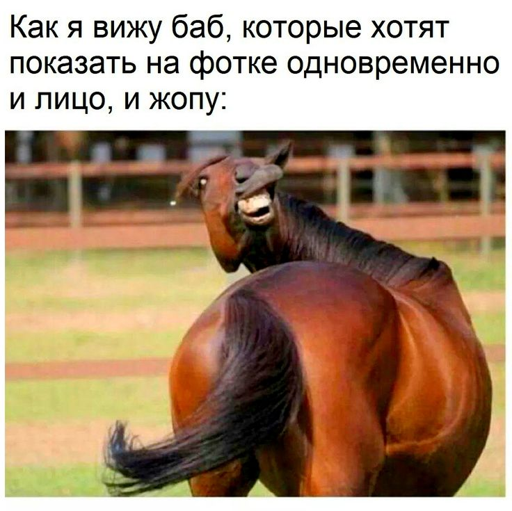 Анекдот Про Лошадь