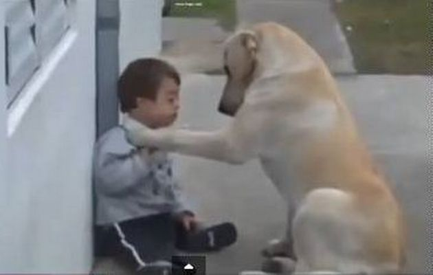 Dog Determined To Make Friends With Boy With Down Syndrome