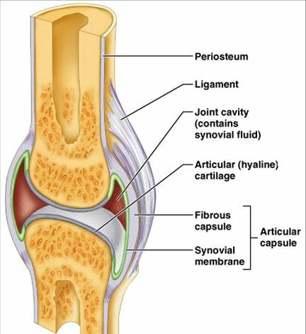 Synovial Joint | Medic...