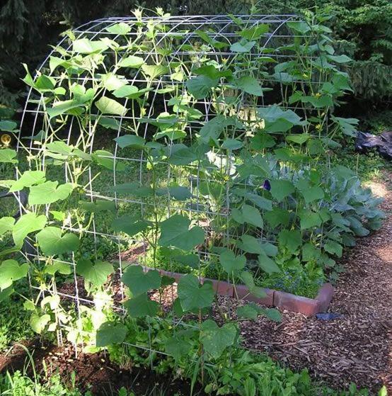 how to set up garden netting trellis