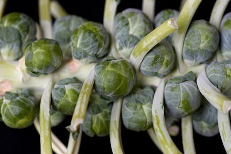 More like this: brussels sprout , apple recipes and high protein ...