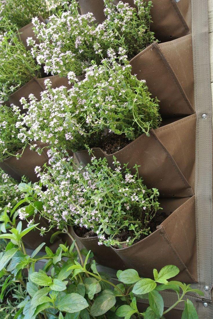vertical herb garden the image kid has it. Black Bedroom Furniture Sets. Home Design Ideas
