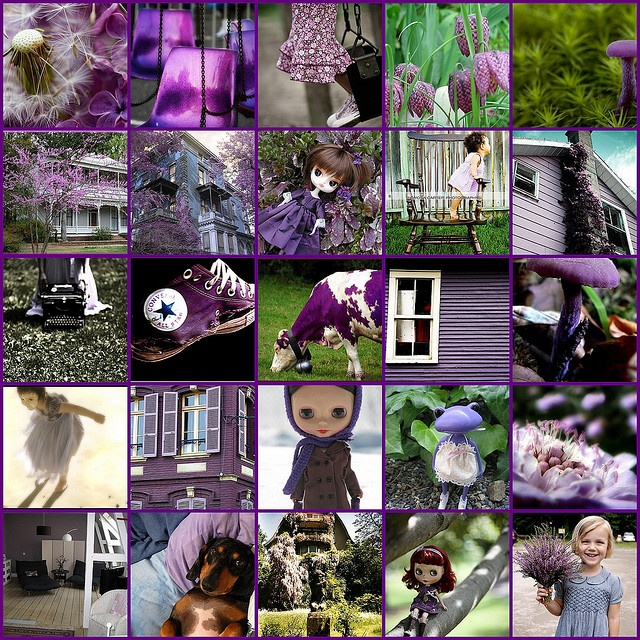 So many lovely Purples