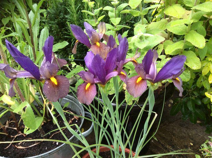 flower genus names