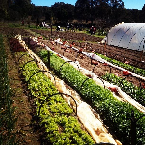 Backyard Permaculture Gardening Australia : gardens