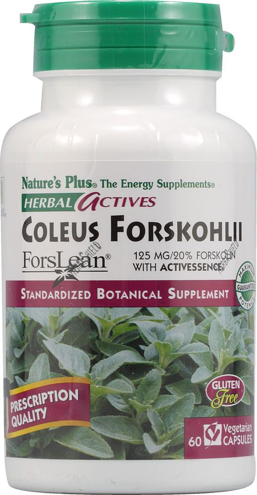 Dr. Oz says Supplement to Break Down Fat: Forskolin Research has
