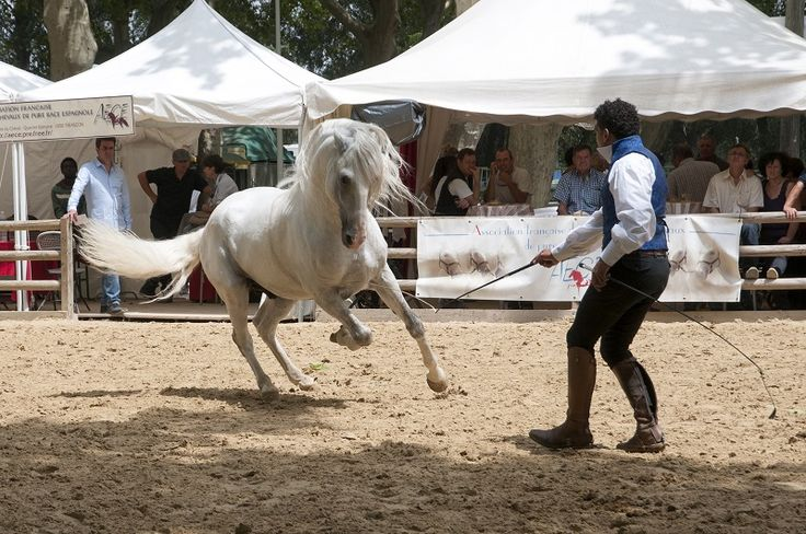 Beaucaire rencontres equestres mediterraneennes 2016