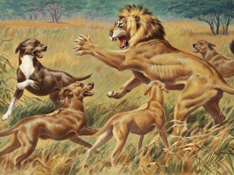 Rhodesian Ridgeback Li...