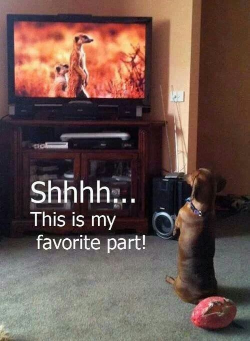 Weiner Dog Funny Quotes. QuotesGram